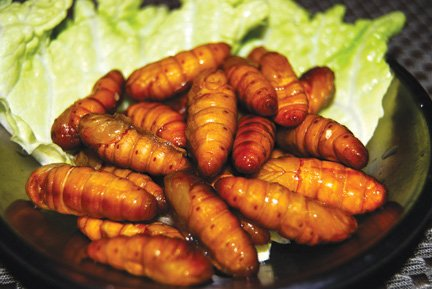 Roasted Silk Worms