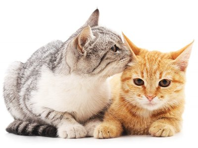 two cats.png