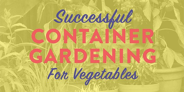 Successful Container Gardening For Vegetables.png