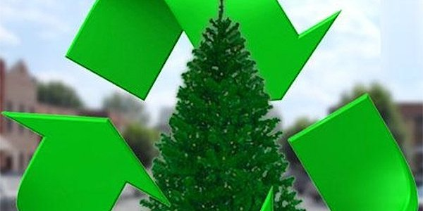 christmas-tree-recycling 1.png