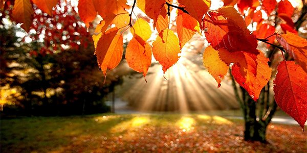 autumn leaves 1.png