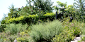 Landscaping with Native Plants.png