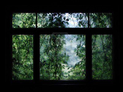 6580289-dark-window-to-nature.jpg